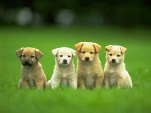 puppyplaygroup