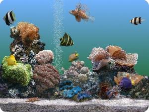 SereneScreen-Marine-Aquarium_1